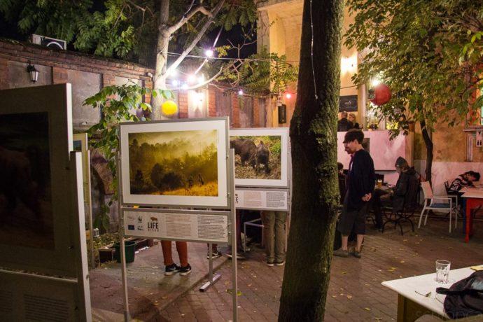 Bison exhibition in Bucharest, Romania.